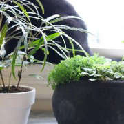 Plants with Black Cat in Background, Gardenista