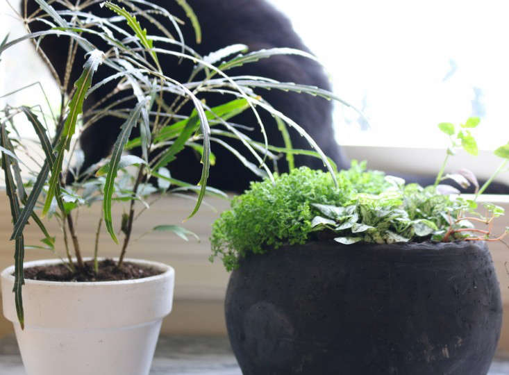 how to stop wallabies eating my plants