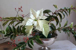 Poinsettia bouquet, adding flowers ; Gardenista