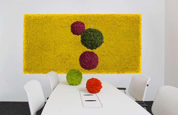 Polar-Moss-Spheres-and-Flex-wall-Gardenista