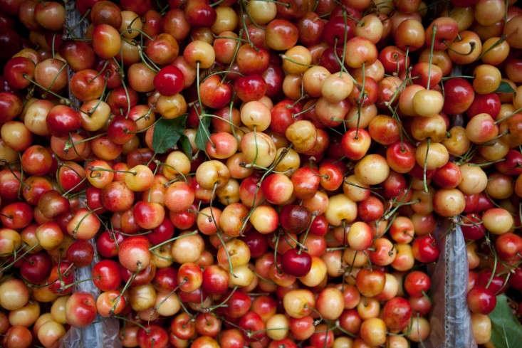 Portland-Farmers-Market_Michael-A-Muller-cherries