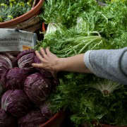 Portland-Farmers-Market_Michael-A-Muller-radicchio