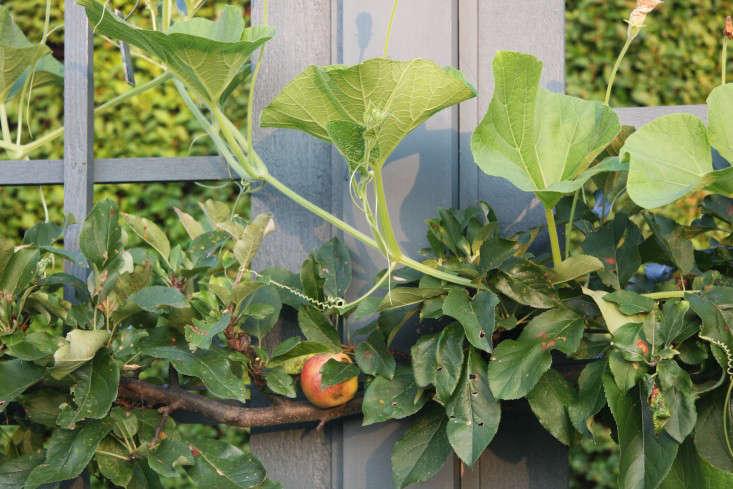 Potager-CUespalier-AFilippone-gardenista