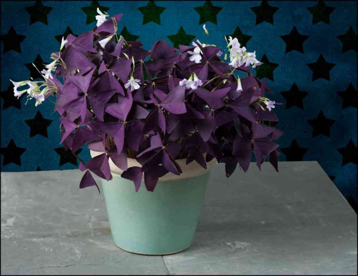 Expert advice 10 best low maintenance houseplants gardenista - Low maintenance plants for indoors ...