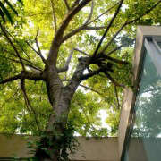 RMA-Architects-house-built-around-a-tree-in-india-gardenista