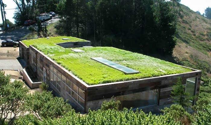 Rothschild-Schwartz-green-roof-sausalito-gardenista