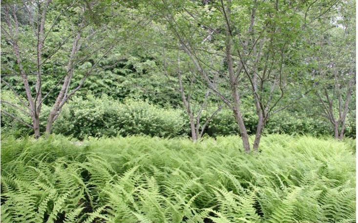 Rumsey-farber-greenwich-all-green-landscape-with-ferns-gardenista