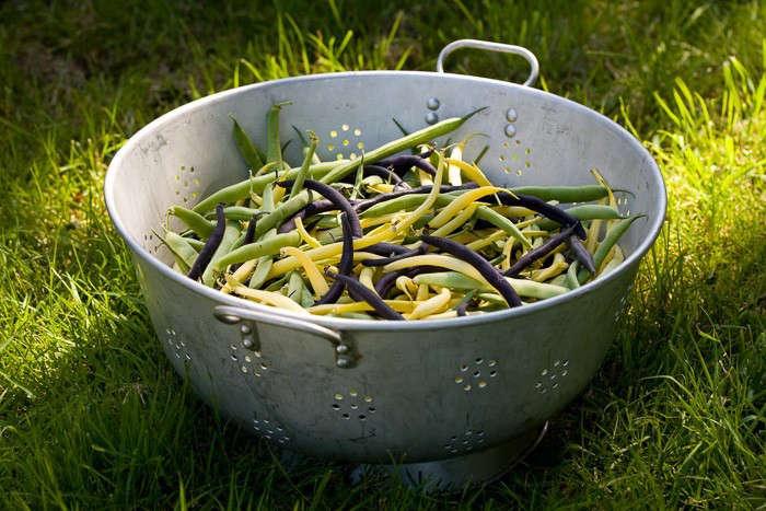 SRKG-French-beans-photo-Jonathan-Buckley