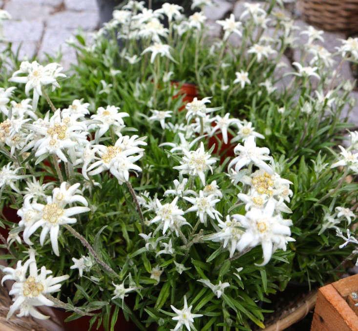 Samedan-Switzerland-Flower-Shop-Gardenista-2