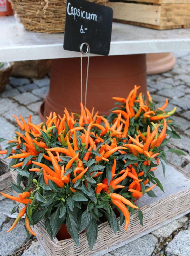 Samedan-Switzerland-Flower-Shop-Gardenista-4