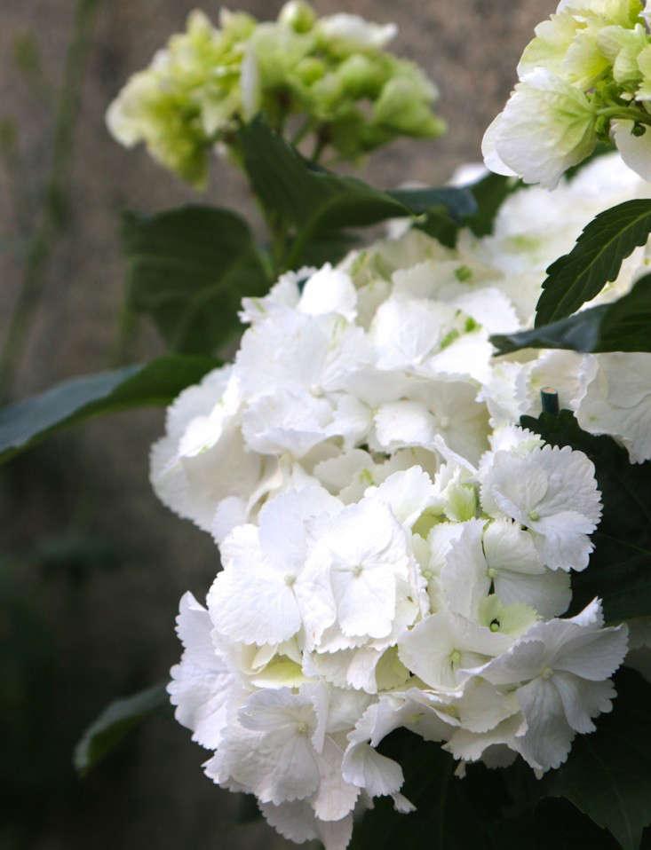 Samedan-Switzerland-Flower-Shop-Gardenista-6