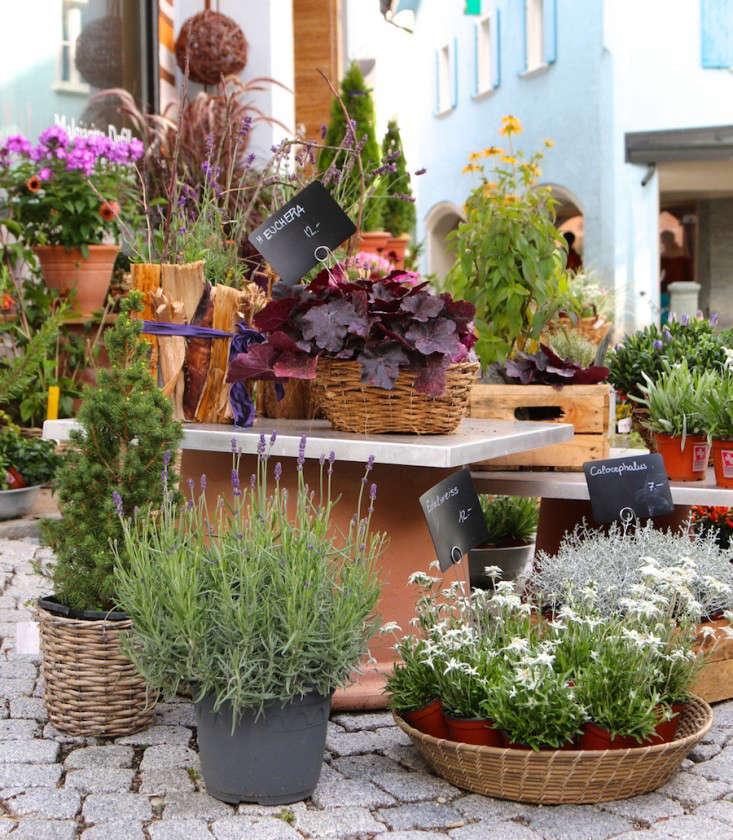 Samedan-Switzerland-Flower-Shop-Gardenista-8