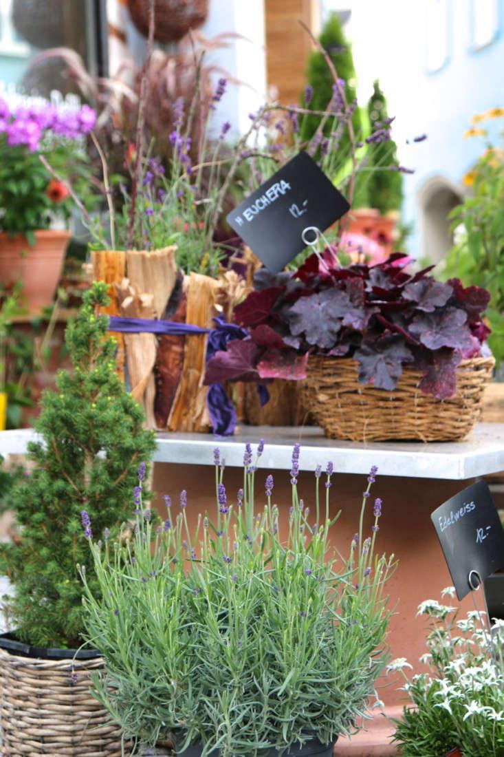 Samedan-Switzerland-Flower-Shop-Gardenista-9