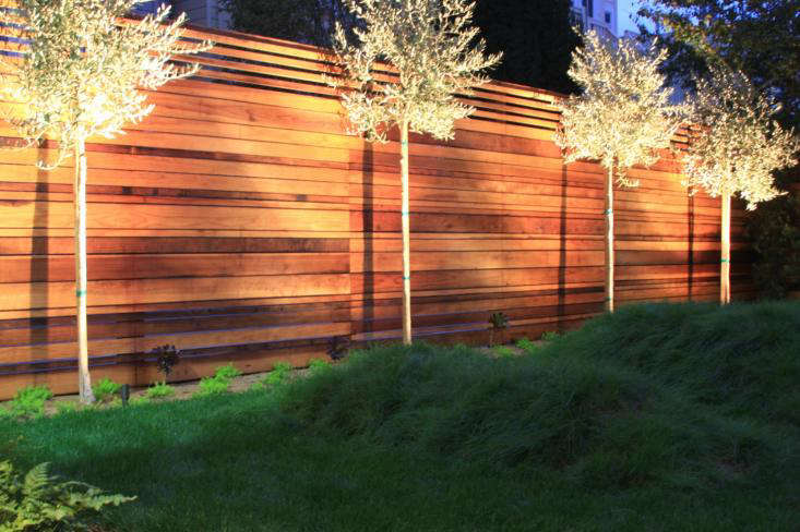 San Francisco Garden with Wood Fence and Uplit Trees at Night