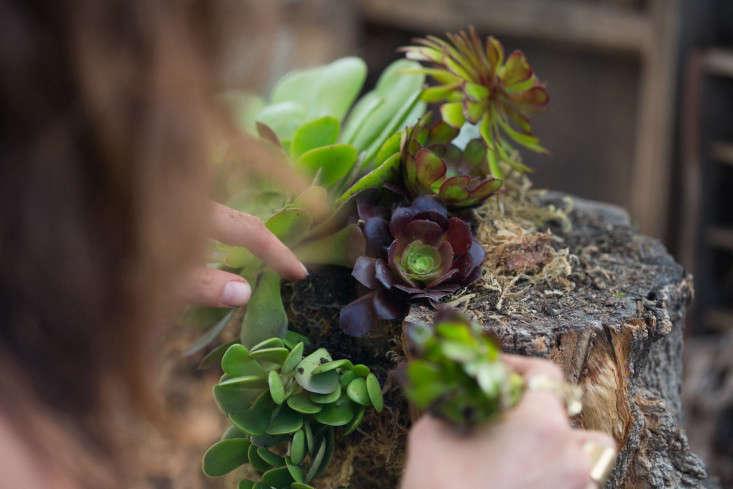 Searoon-4-Mimi-Giboin-gardenista