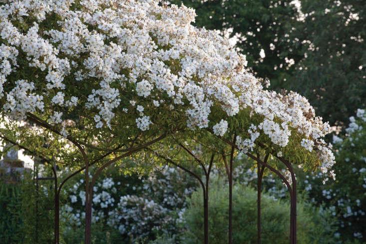 Sissinghurst-Jonathan-Buckley-photo-rosa-mulliganii