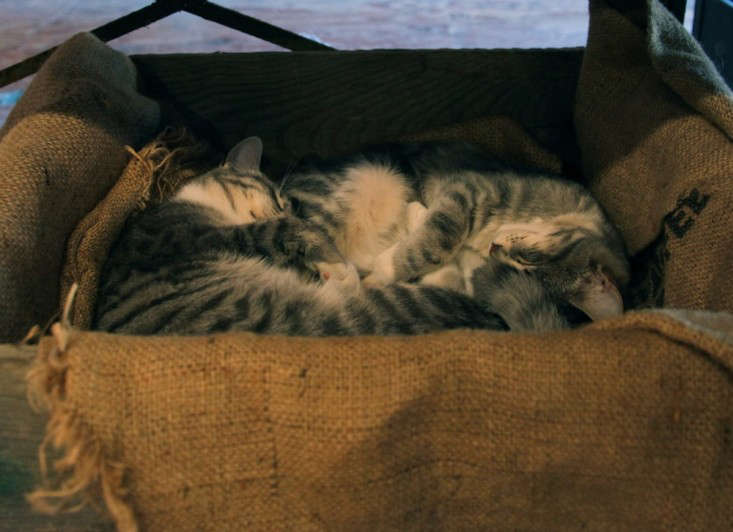 Small Gray and White Cats Sleeping in a Burlap Box, Gardenista