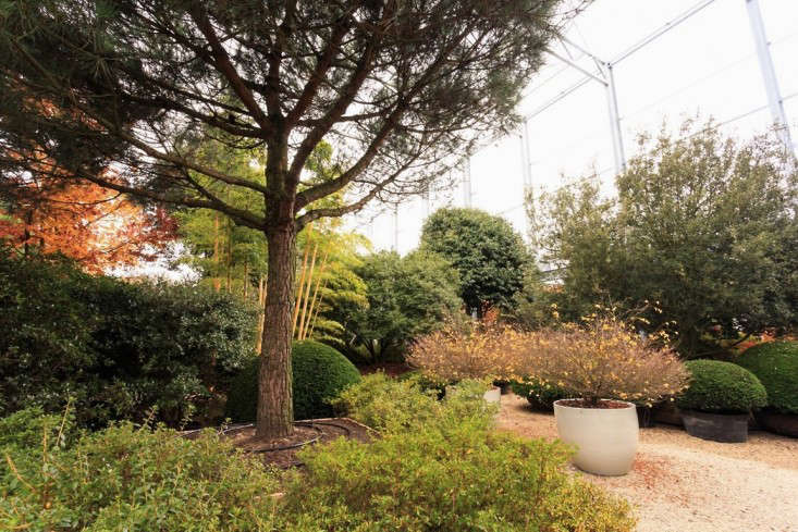 Solitair-greenhouse-shrubs-gardenista