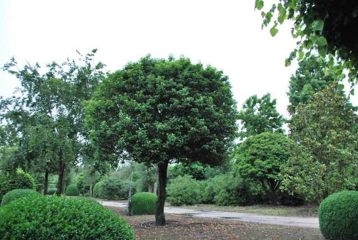 Shopper 39 s diary specimen trees and special shrubs from for Small specimen trees