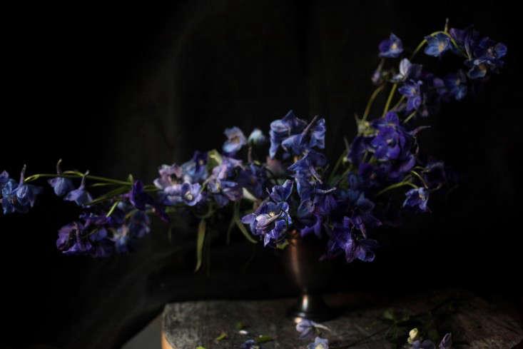 Sophia_Moreno_Bunge_Gardenista_Belgian_Arrangement