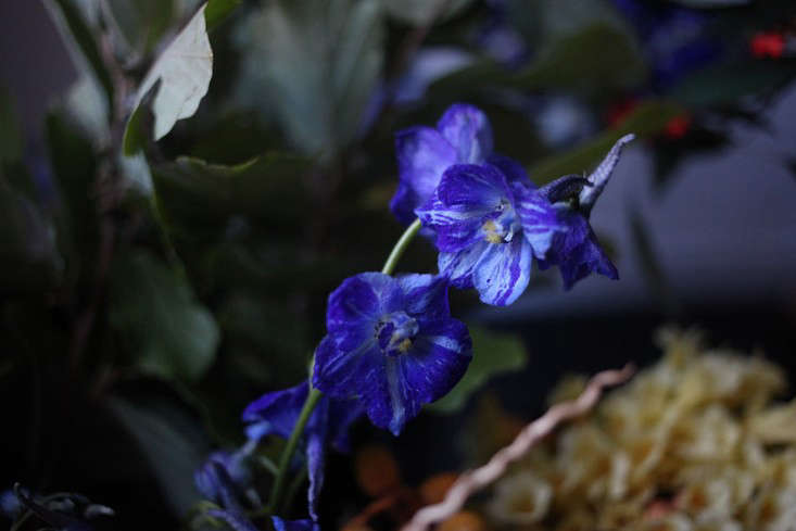 Sophia_moreno_bunge_Gardenista_Belgian_Delphinium