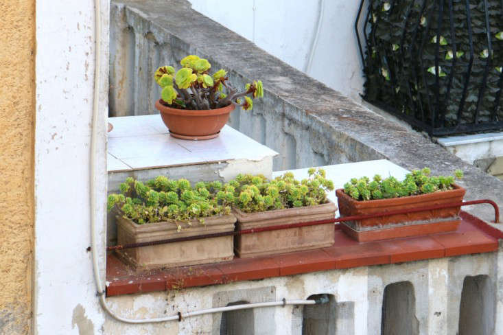 Steal-this-look-terra-cotta-window-boxes-meredith-swinehart-gardenista-2