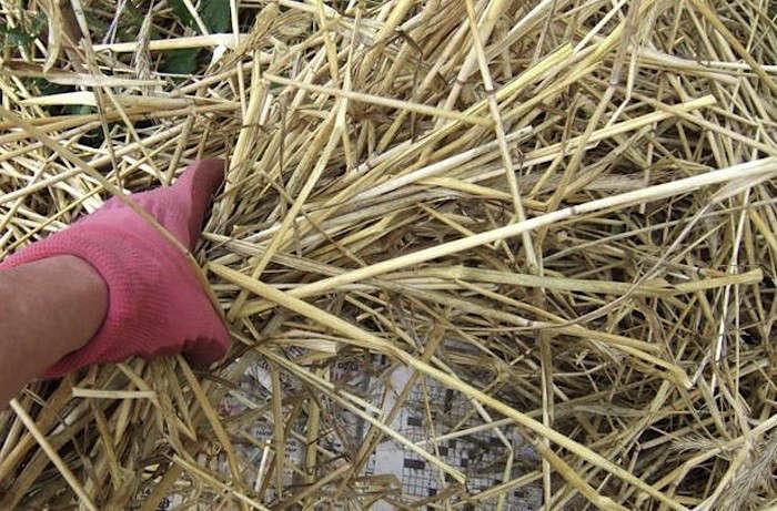 Straw-Mulchi-image-Julie-A-Martens-gardenista