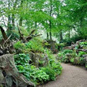 Stumpery-Outline-Productions-Gardenista
