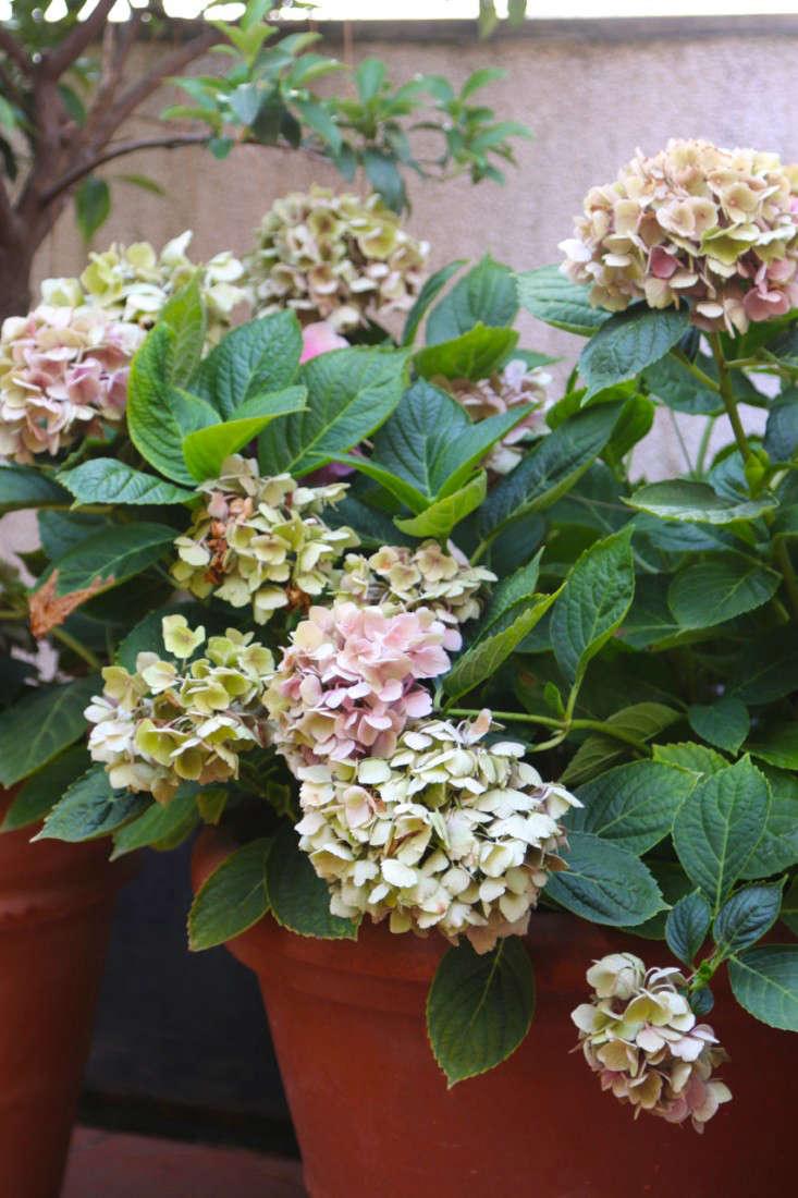 Summer-Courtyard-Garden-In-Italy-Gardenista-12