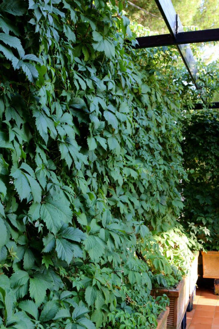 Summer-Courtyard-Garden-In-Italy-Gardenista-13