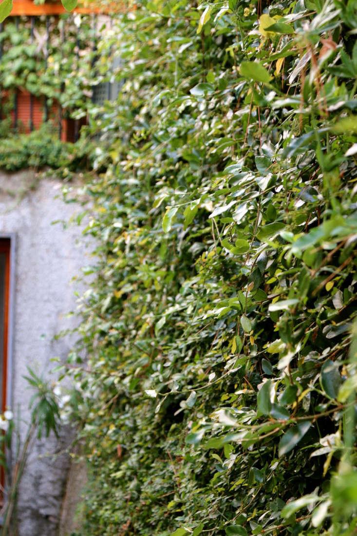 Summer-Courtyard-Garden-In-Italy-Gardenista-21
