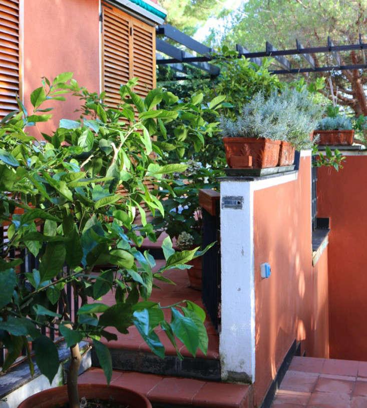 Summer-Courtyard-Garden-In-Italy-Gardenista-25