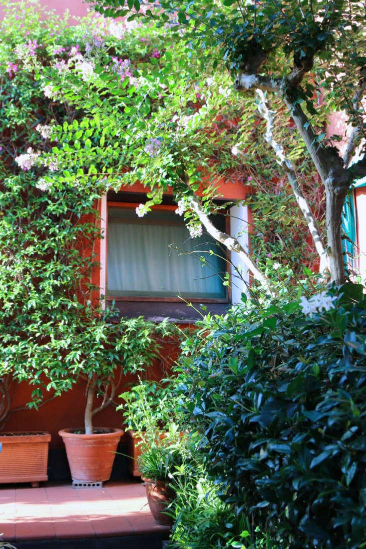 Summer-Courtyard-Garden-In-Italy-Gardenista-26