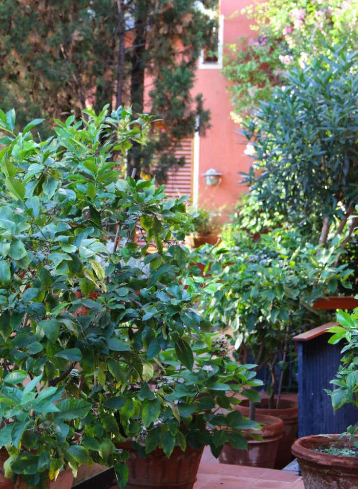 Summer-Courtyard-Garden-In-Italy-Gardenista-29