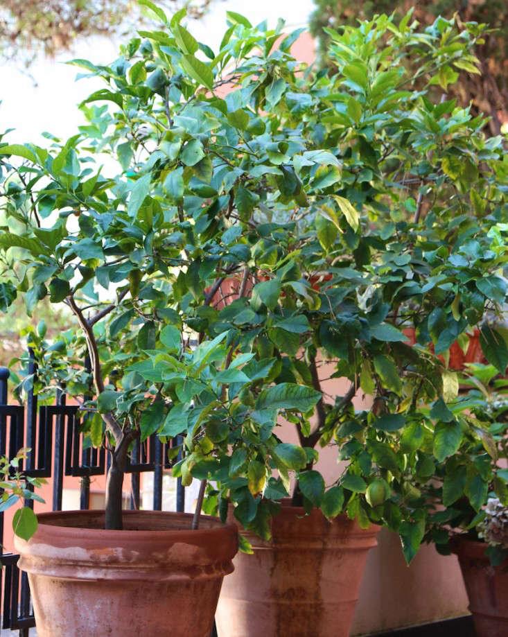 Summer-Courtyard-Garden-In-Italy-Gardenista-6