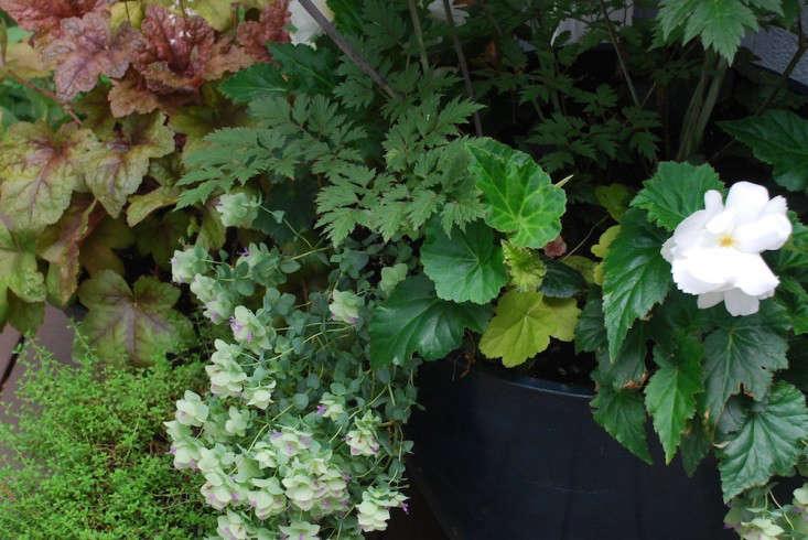 Susan-Nock-Finalist-Gardenista-Considered-Design-Awards-5