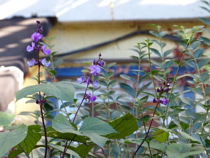 Tara-bklynpurpleflowers