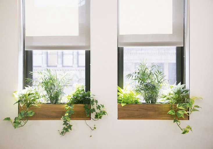 Ask The Expert 10 Tips For Office Plants From The Sill