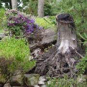 Tree-Stump-Deborah-Silver-BLog-Gardenista