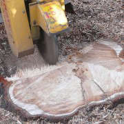 Tree-Stump-Grinding-Image-via-Tom-Kent-Stump-Removal-Gardenista