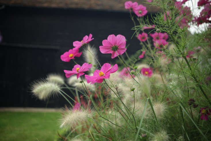 Ulting-Wick-cosmos-and-barn
