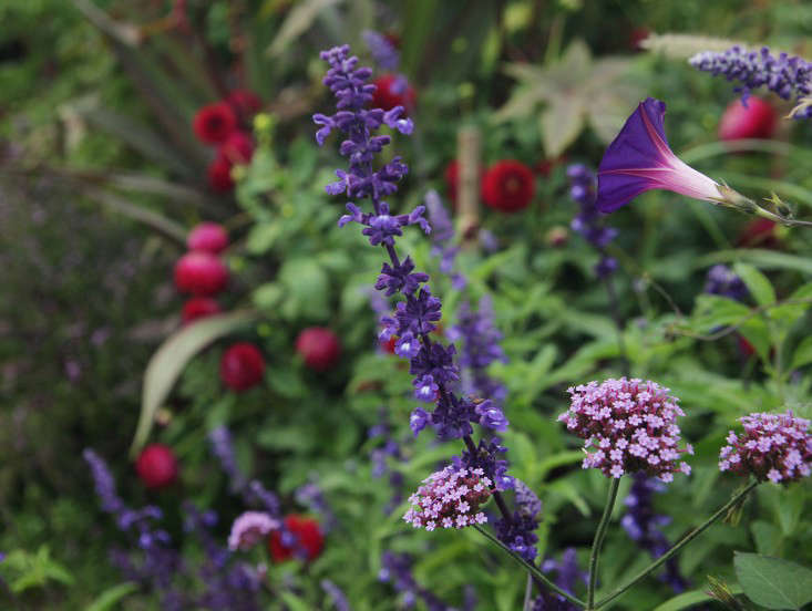 Ulting-Wick-purples-zing