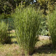 Wellfleet-Sheila-Narusawa-Garden-3-gardenista