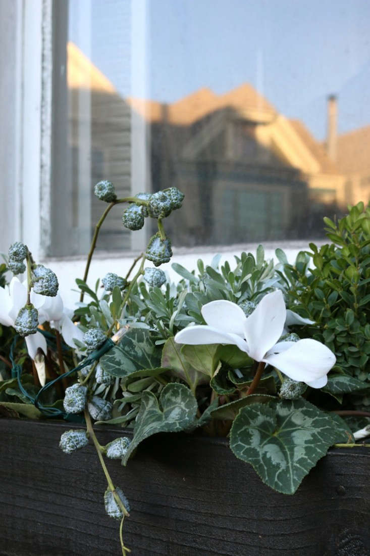 White cyclamen and Black Window boxes, Gardenista