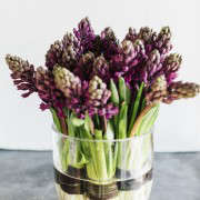 Winston flowers by M Piazza, purple hyacinths