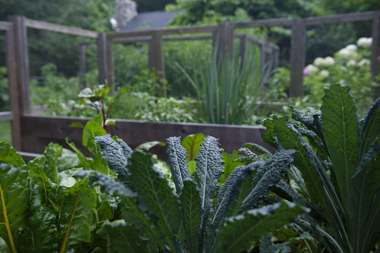 #1chard&kale-laura-silverman-gardenista