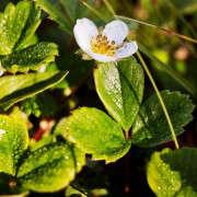 academy-of-sciences-green-roof-liesa-johannssen-11-gardenista