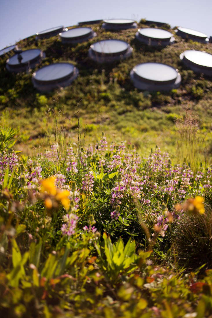 academy-of-sciences-green-roof-liesa-johannssen-12-gardenista