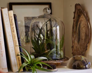 gardening 101 how to water an air plant l Gardenista