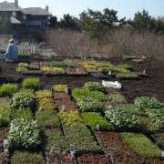 alive-structures-green-roof-gardenista